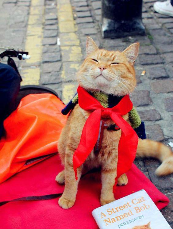 Bob the cat as A Street Cat Named Bob (2016). Image courtesy of the official Bob the cat Facebook page.
