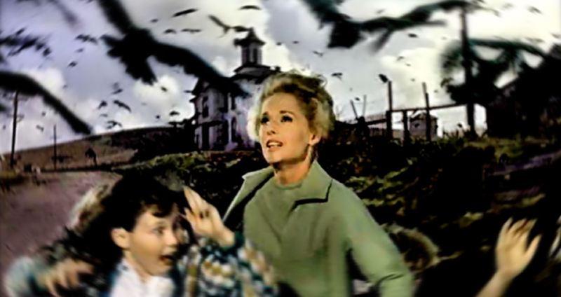 image fil bird tippi hedfen attack