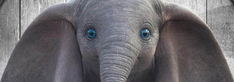 image dumbo 2019 baby elephant